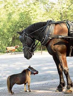 el_caballo_mas_pequeno_del_mundo