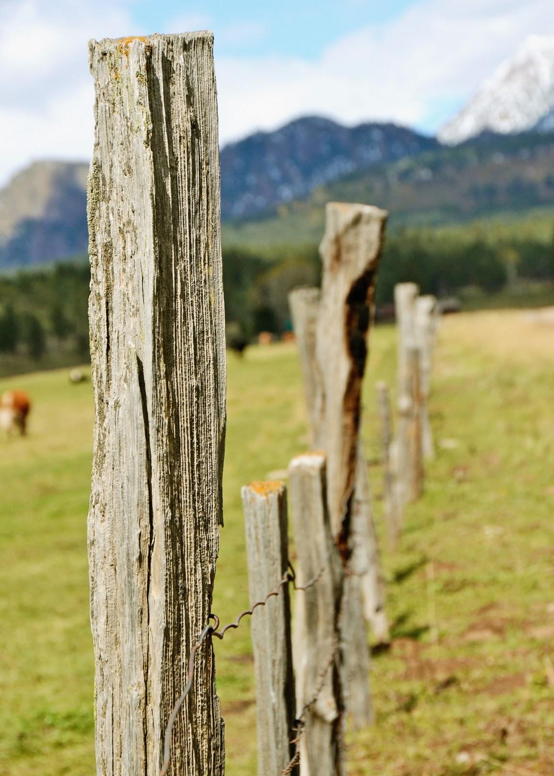 fence+post.jpg