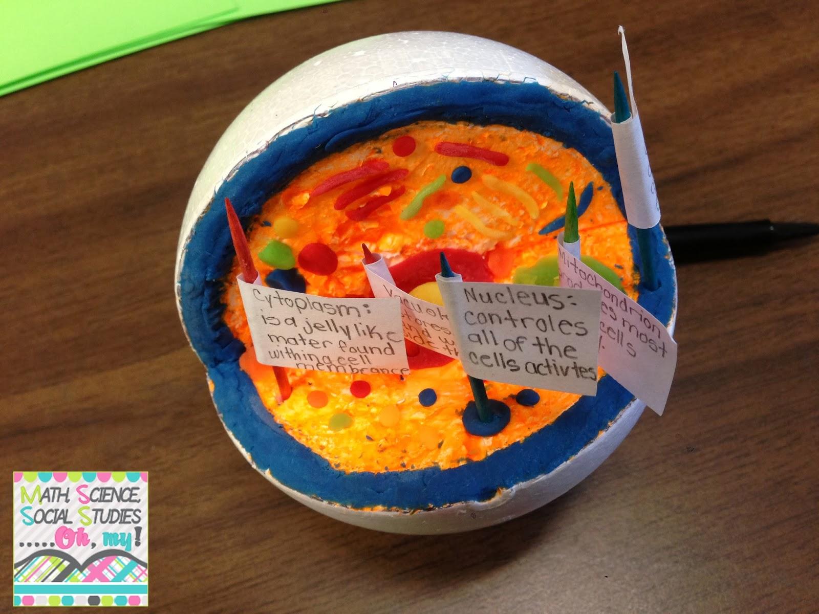 animal cell model styrofoam ball