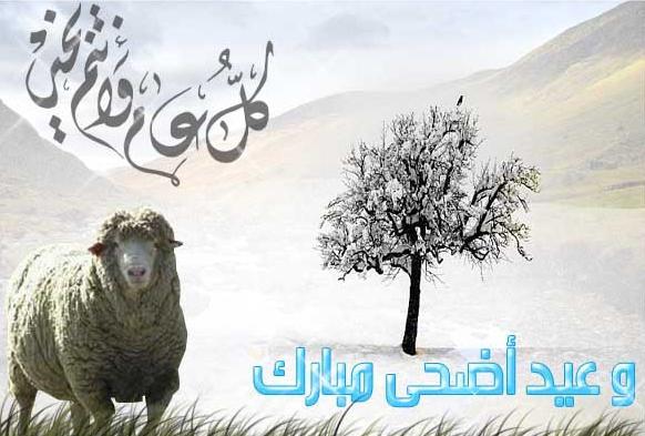 أضحى مبارك ربيع الخبر