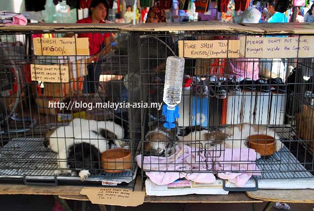 Pets at Gaya Street Sunday Market