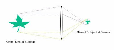 Lens magnification