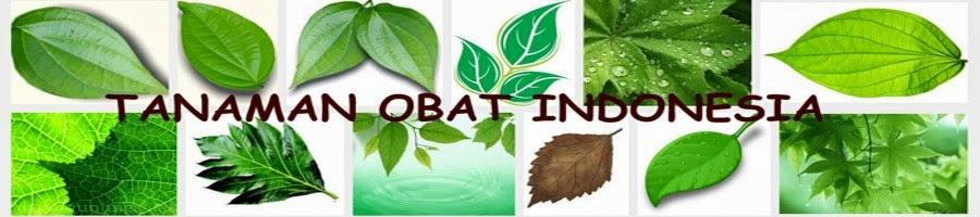 Jual Tanaman Obat - Jualtanamanobat.com