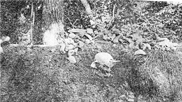 Giant Human Skeletons Nephilim