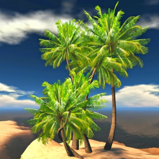 """Coconut - """"The Tree of Life"""""""
