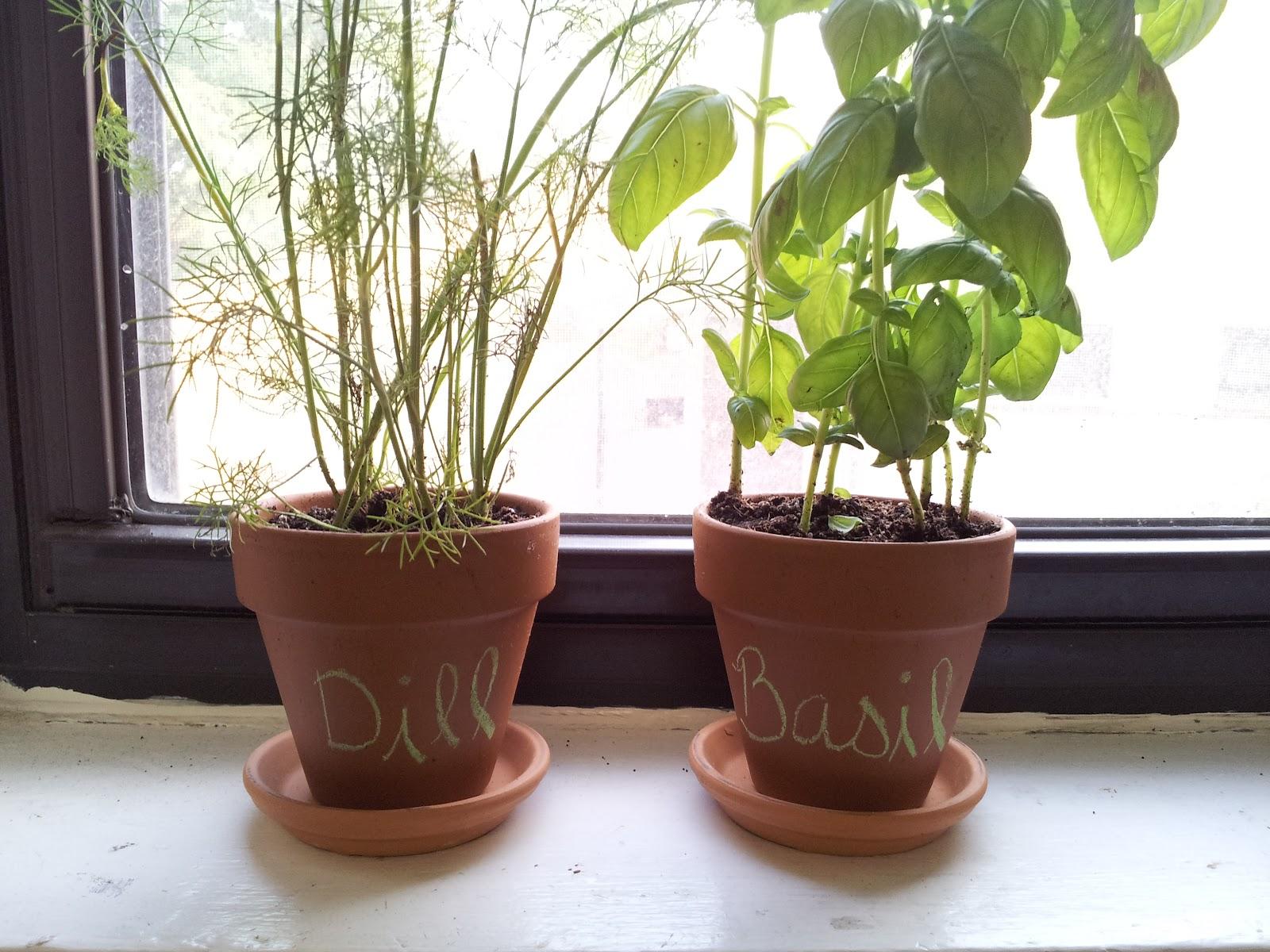 New Girl Old Town Indoor Gardening