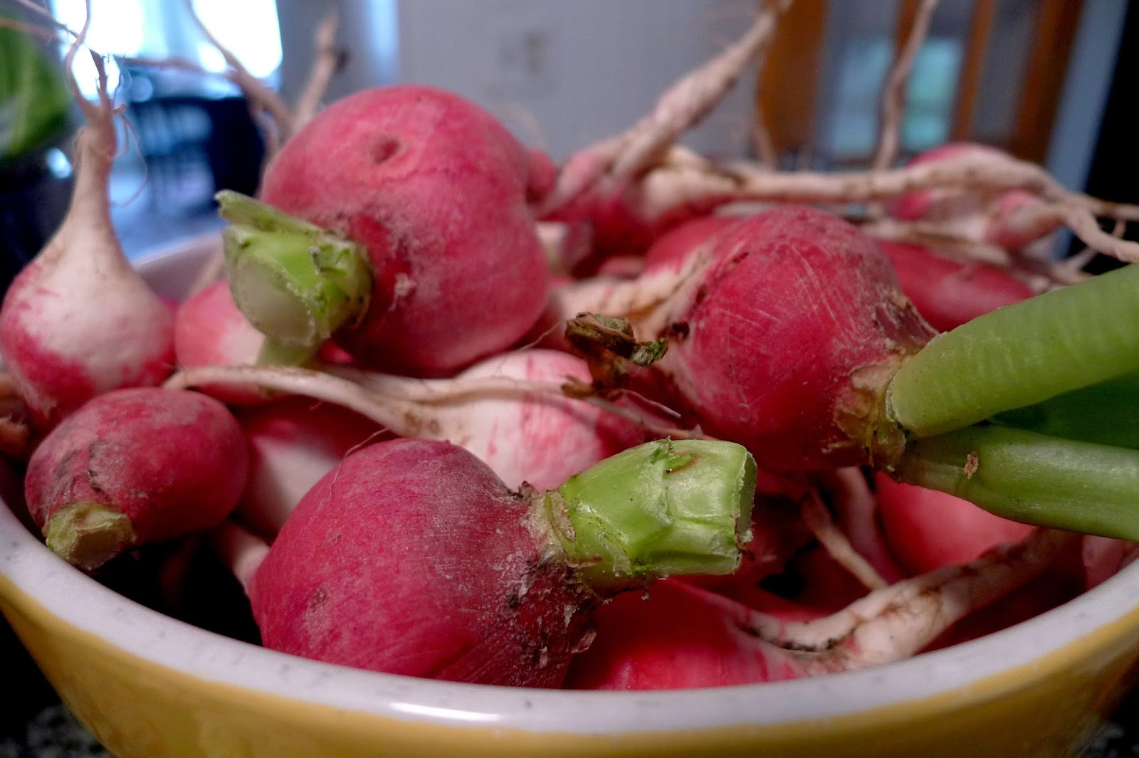 Harvested radishes, urban farming