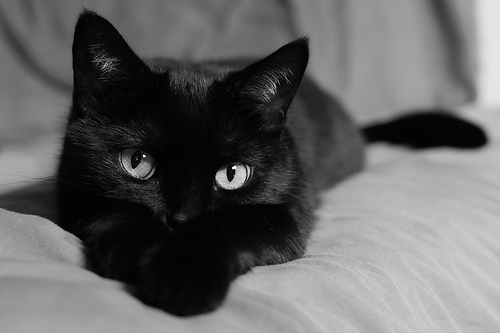 Grace Elliot - blog.: Halloween - Cats and the Undead.
