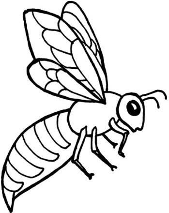 Proyecto de aula (insectos)
