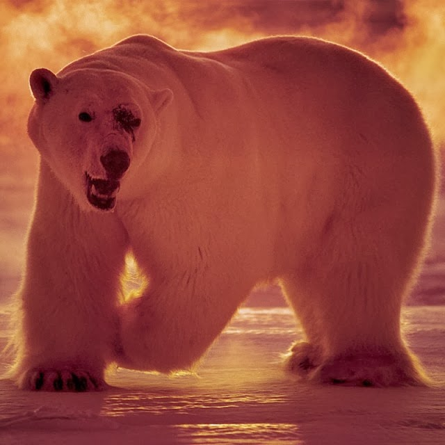 Instagram of Paul Nicklen