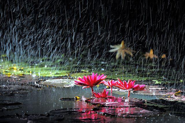 Le symbolisme de la pluie
