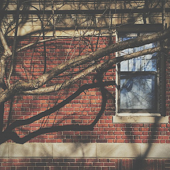 Branching Shadows © Joshua Sariñana