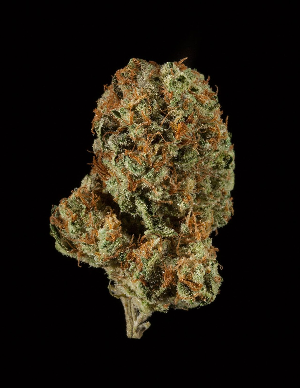 Blueberry OG | #Cannabis #Conservatory