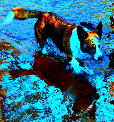 Wilson Wading - Picture modified in PicMonkey