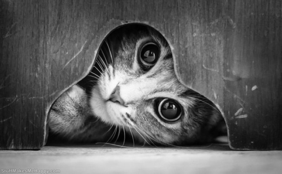 Black-And-White Pictures of Cats, Personifying Their Mysterious Life