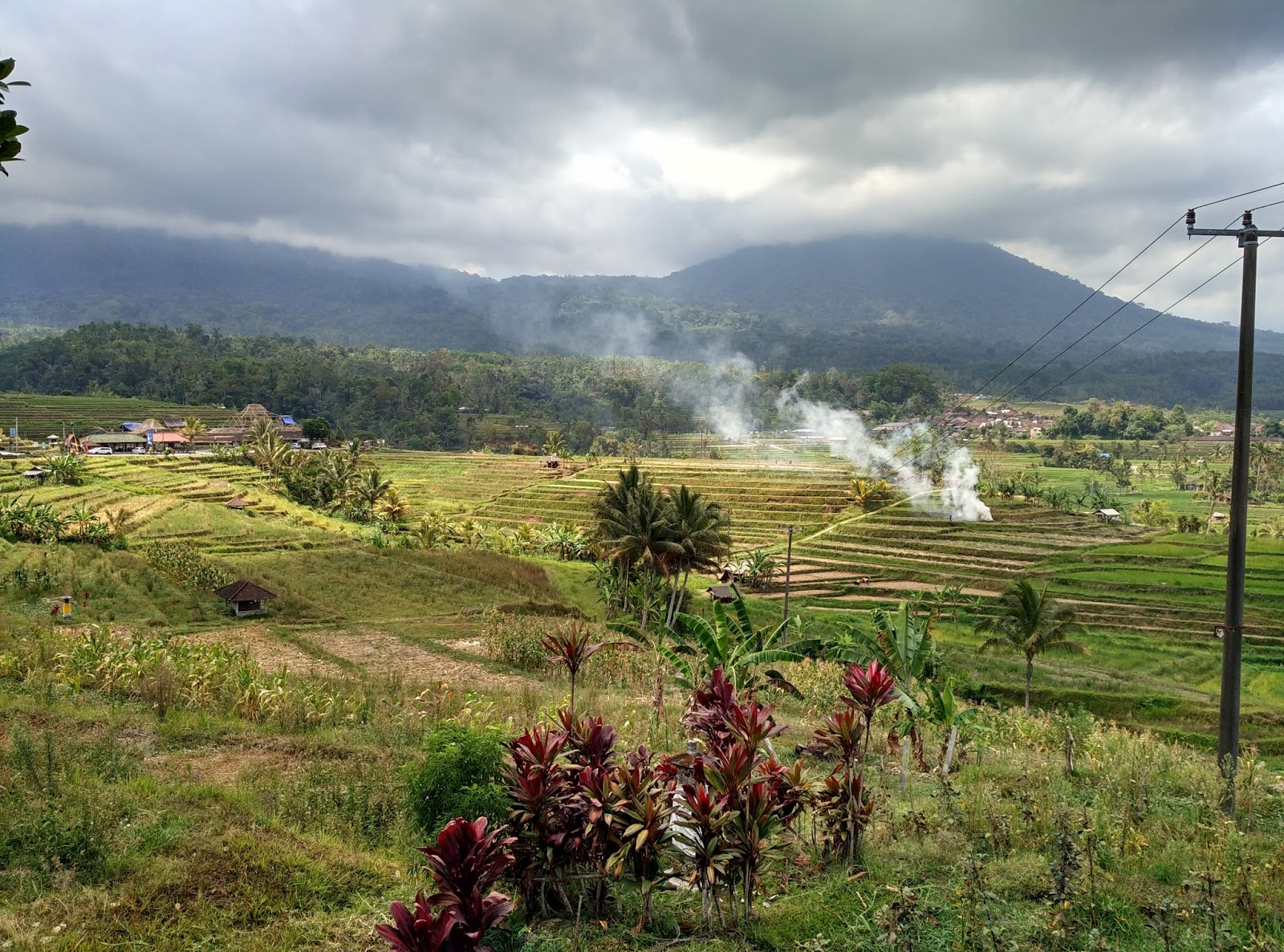 Niya 39 s world rice terrace in ubud bali indonesia for Terrace ubud bali