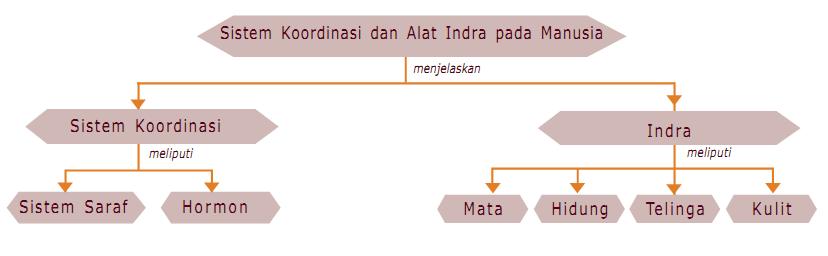 Materi Sistem Koordinasi dan Alat Indra pada Manusia - IPA SMP Kelas