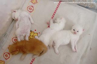 cute kitten pose