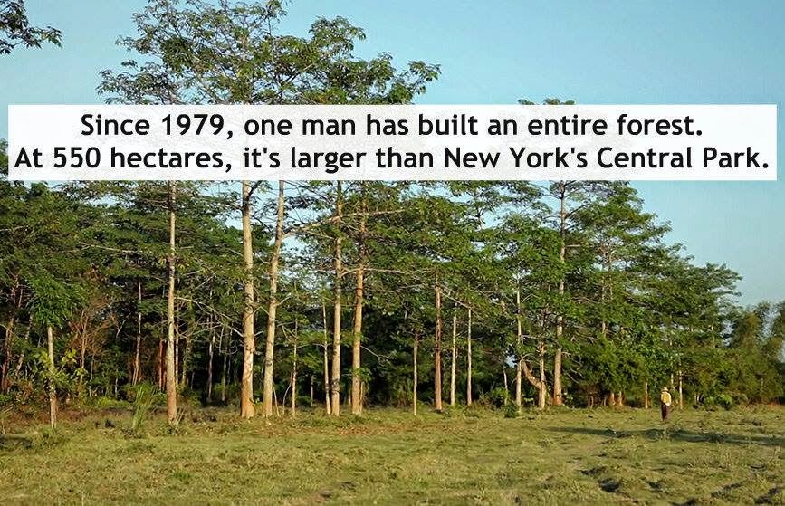 Man single-handedly grows a forest larger than Central Park