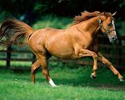 IMAGENES DE ANIMALES 2 fondos animales caballos