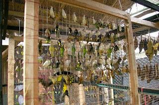 butterfly park bandung