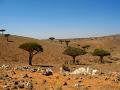 Socotra Botanic Garden