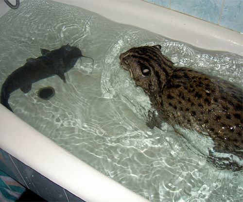 Fishing cat new uses for your bathtub for A fish in the bathtub