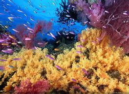 gambar_pemandangan_laut_bawah
