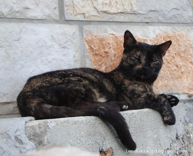 uspavana maca