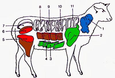 Les différents morceaux du mouton