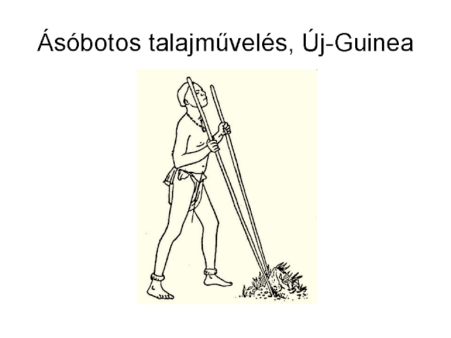 ásóbotos földművelés Új-Guinea