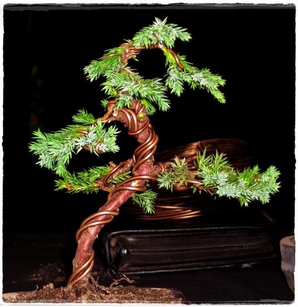 """<img src=""""Bonsai.jpg"""" alt=""""membuat dan merawat bonsai"""">"""