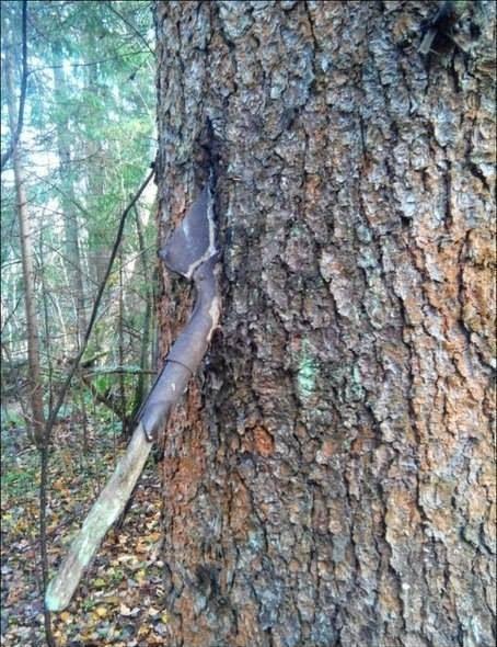 Objetos militares atrapados en árboles.
