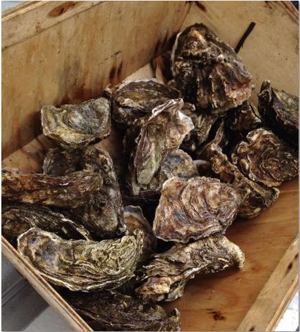 Killary Fjord oysters