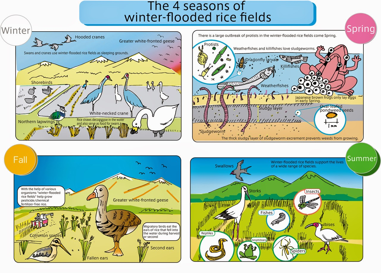 fieldwork on ecosystems An ecosystem is comprised of all the non-living elements and living species in a specific local environment components of most ecosystems include water, air, sunlight, soil, plants, microorganisms, insects and animals.