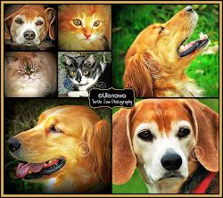 Pet Portraits by Ulanawa