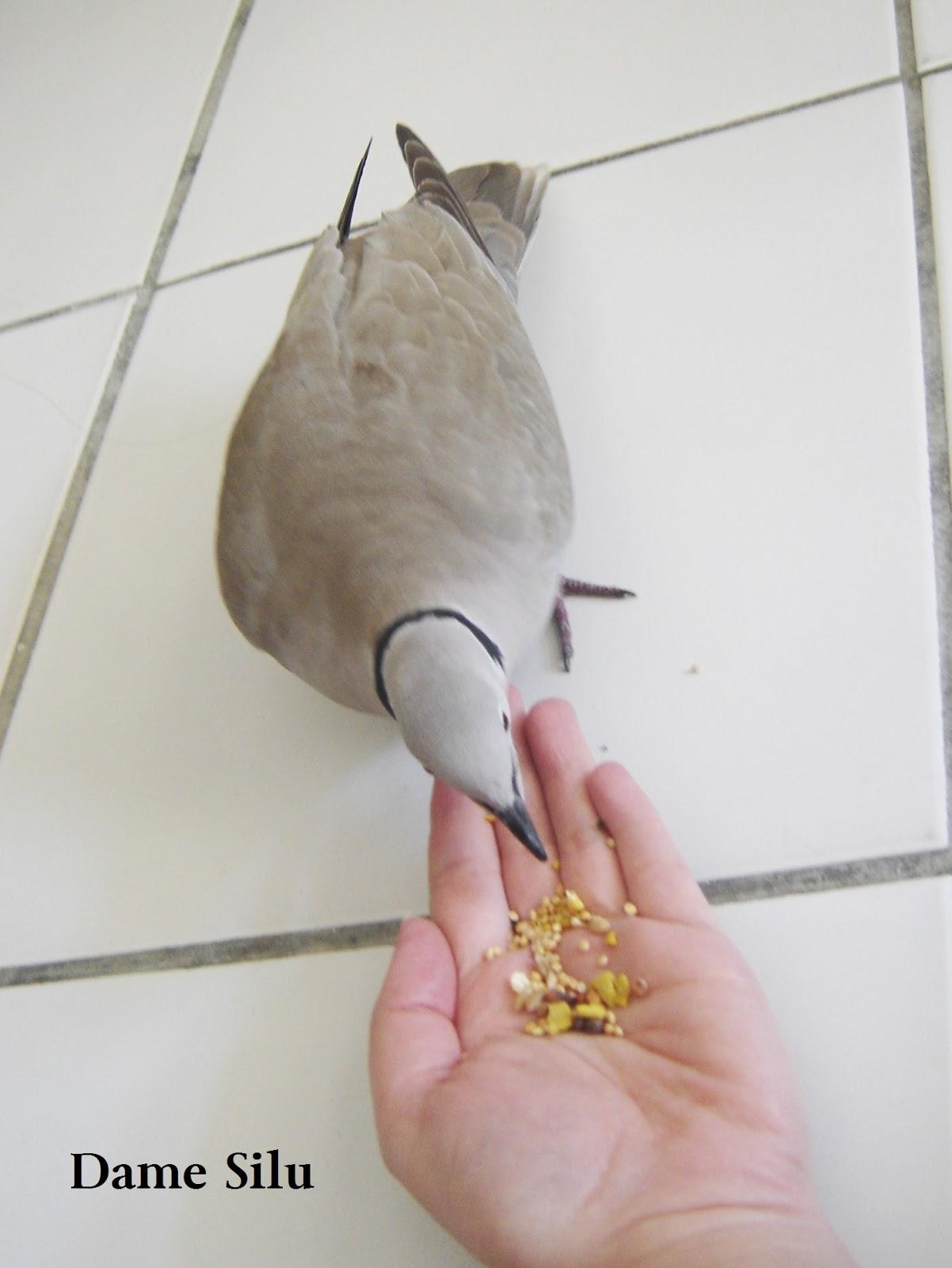 Eskorte i mange la