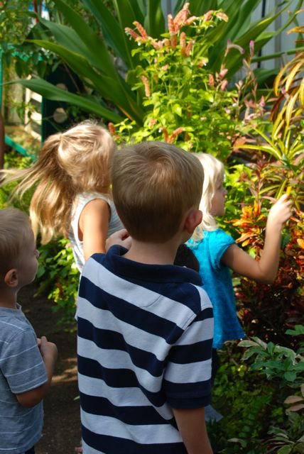 Wife, Mother, Gardener: Kids' trip to Phipps Conservatory