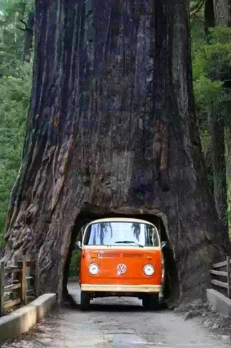 Thru Tree, California.