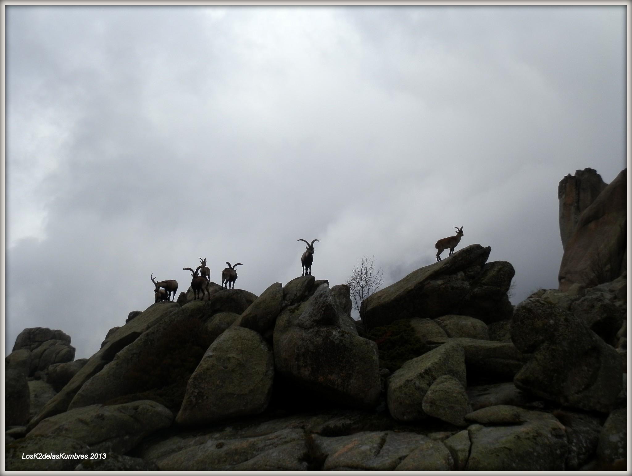 cabras montesas en la base del Yelmo, Rutas por la pedriza
