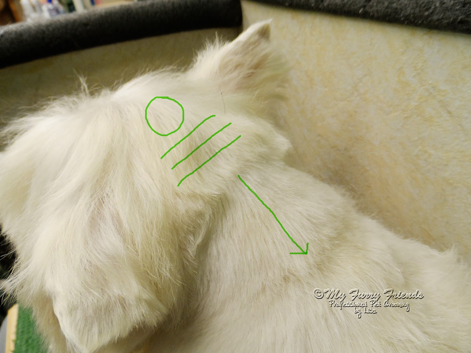 Pet grooming the good the bad the furry pet westie cut solutioingenieria Gallery