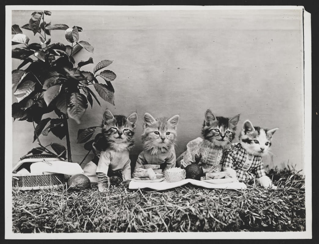 Extraordinary Photos of Animals Posed in Human Situations from the 1910's
