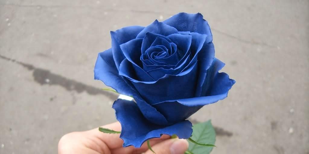 arti bunga mawar biru