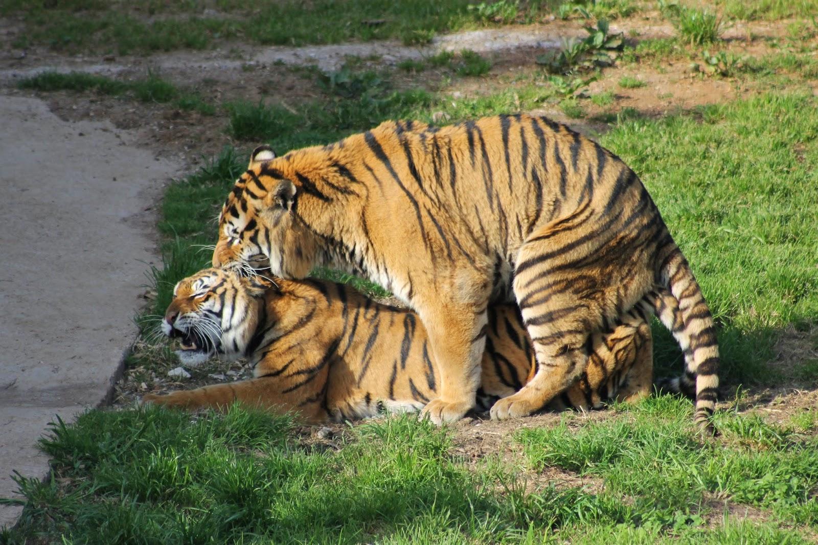 Graceland abril 2014 - Imagenes de animales apareandose ...