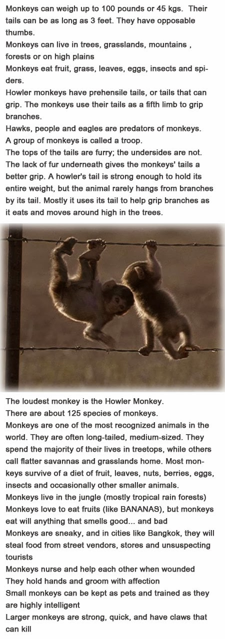 Monkey information for kids