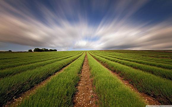 الحقول الطويلة الممتدة , صور خلفيات طبيعيه