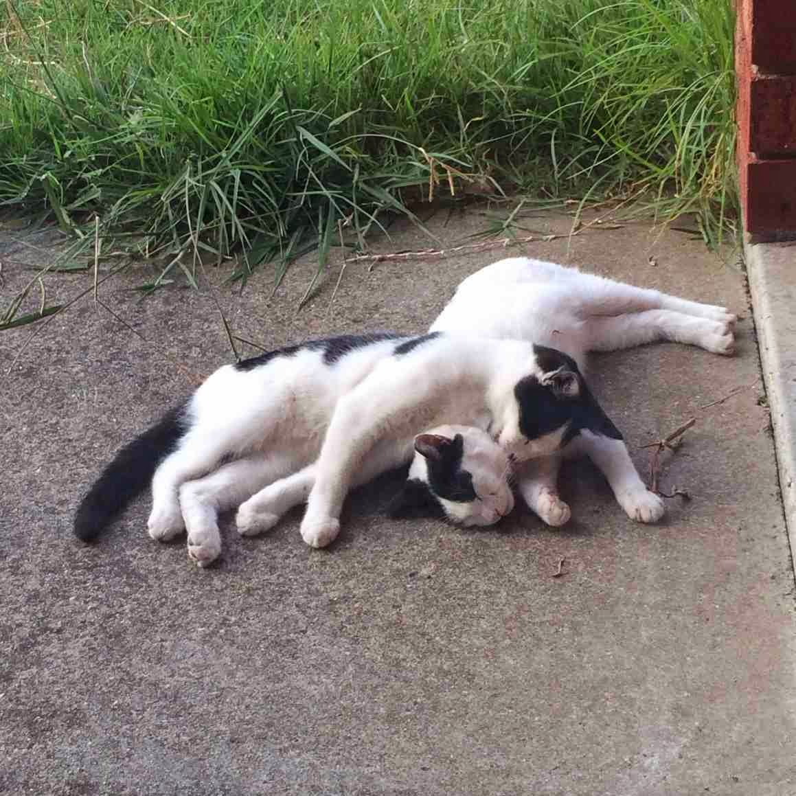 Funny cats - part 96 (40 pics + 10 gifs), cat pictures, cats cuddling