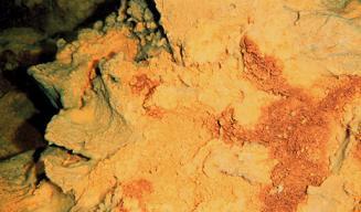 M. ferrooxydans