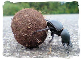 Fıkra: Adamın biri birgün bahçede otururken...  www.uykusuzissizler.com