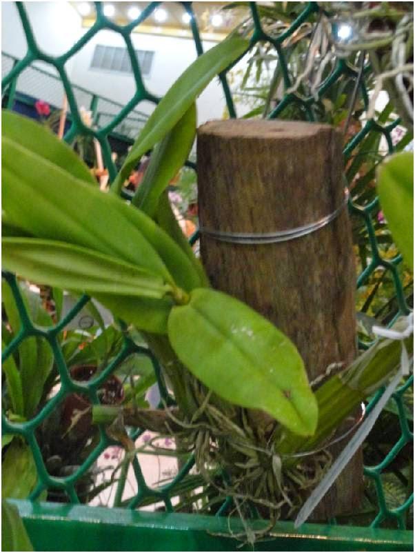 vida a lo verde*living in green*: conchas de coco y troncos como